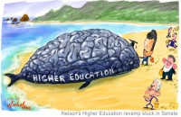 Higher education bill Nelson whale 500wb