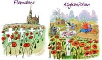 Poppies Flanders Afghanistan Adams 550wb