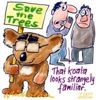 Howard green koala stangely familiar 226233