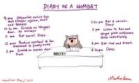Henry report diary of a wombat unpub 600